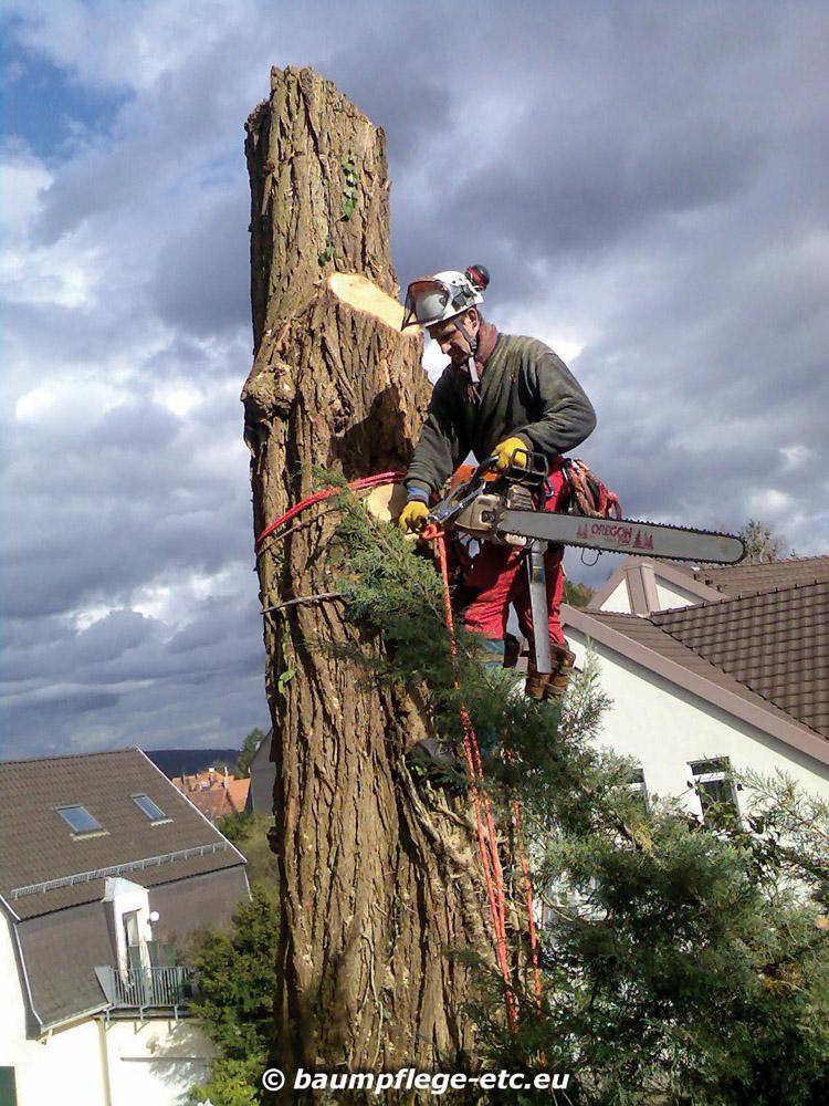 Baumpflege  E.T.C. Baumpflege | Fachmännische Baumpflege und Spezialfällungen